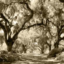 Gregg Flory Photography, Professional Photography Hilton Head Island